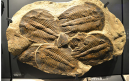 Sự kiện tuyệt chủng kỷ Ordovic: lần đầu tiên sự sống Trái Đất biết tới mùi cay đắng